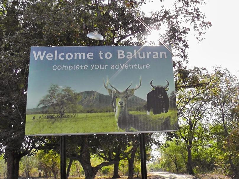 taman nasional baluran africa van java